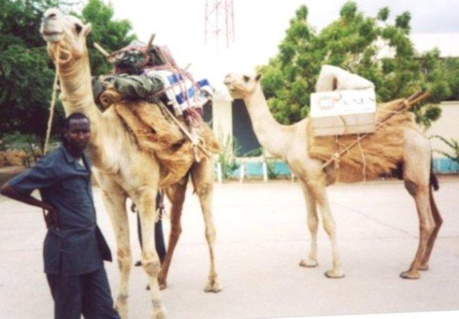 phoca_thumb_l_knls camel library  0