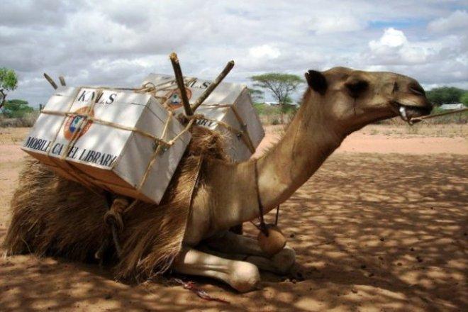 phoca_thumb_l_knls camel library 9