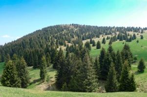 Foreste-Ersaf-1