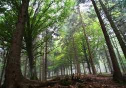 Foreste-Ersaf-3