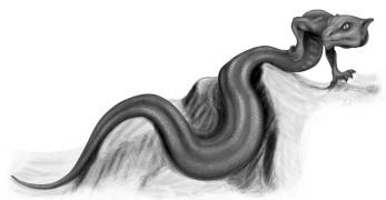 Tatzelwurm2