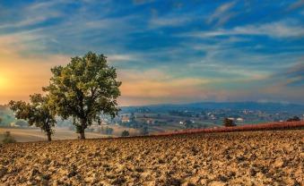 trees-2220367_960_720