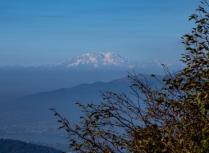 [Il gruppo del Monte Rosa dai monti sopra Colle di Sogno.]